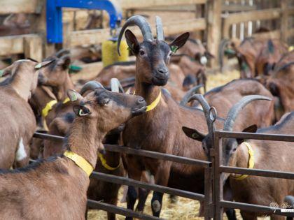 Vakantiehuis bij geitenboerderij van Ozo